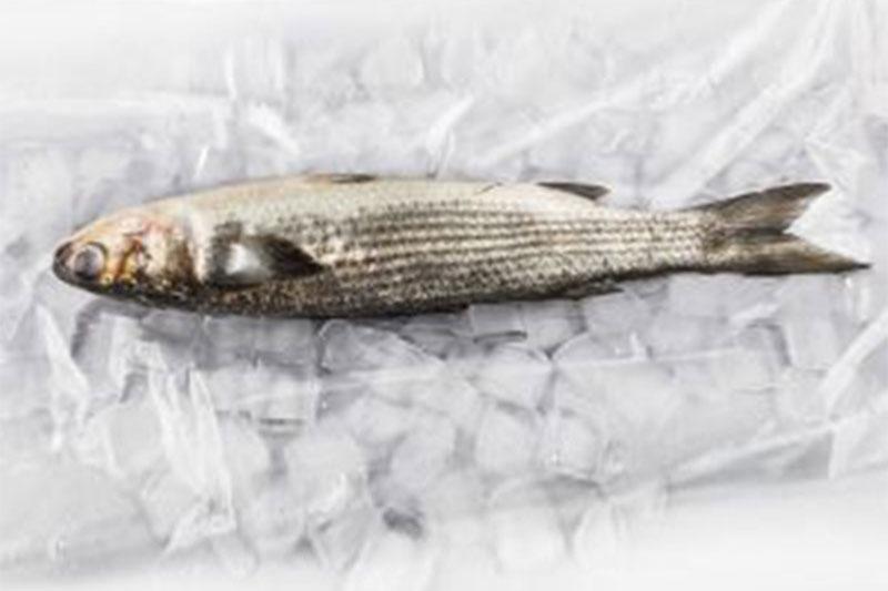 food-fish-case-liner