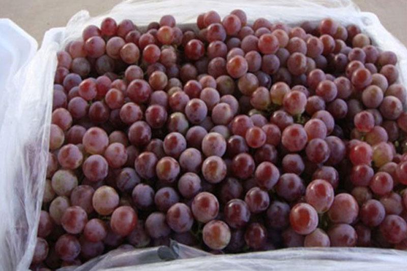 food-grape-liner